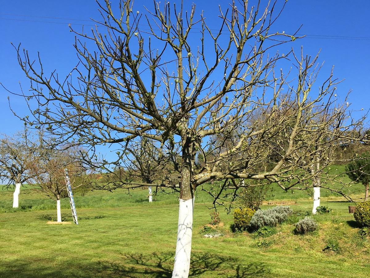 entretien arbre frutier